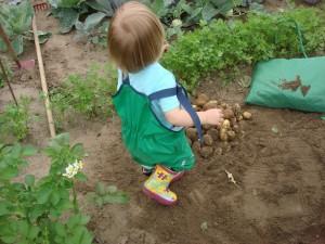 Kartoffelernte II