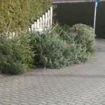 Weihanchtsbaum